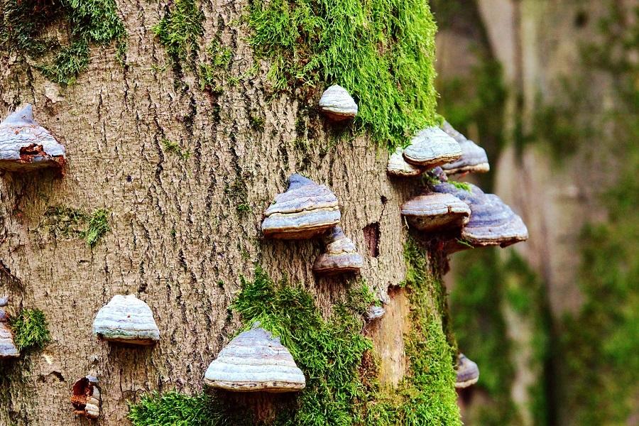 KMS Modul Pilz Baum