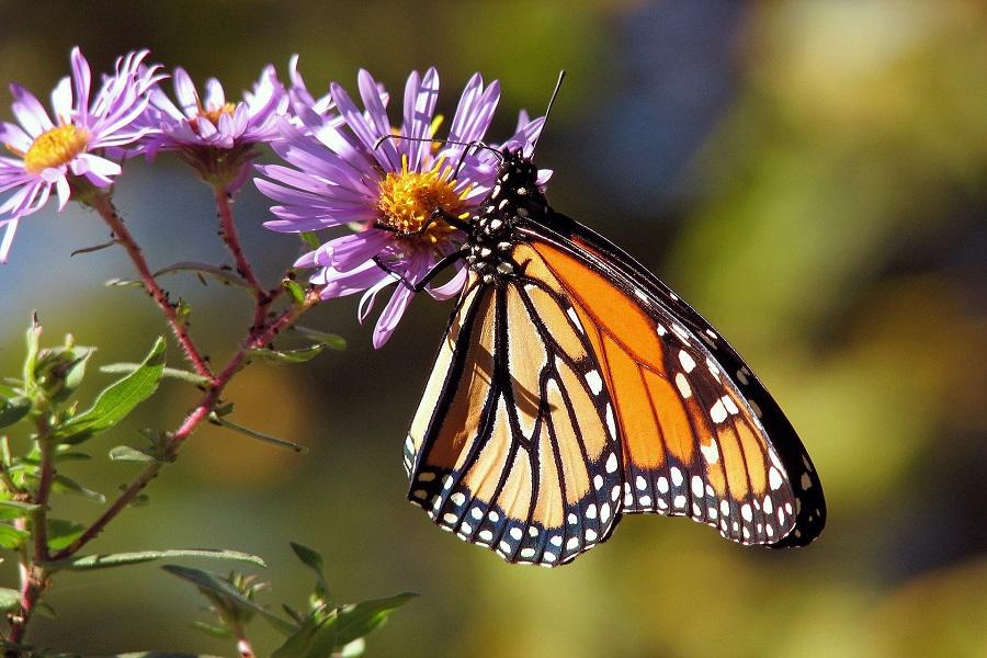 KMS Modul Schmetterling